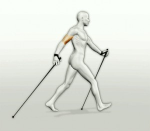 walker1_11